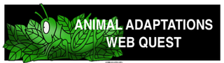 ANIMAL_ADAPT.png